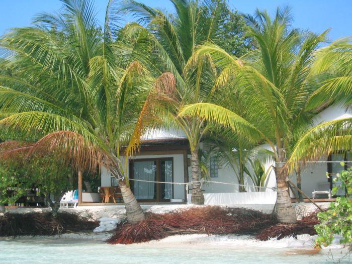 Isole maldive fotografie video notizie consigli utili - Radici palma ...